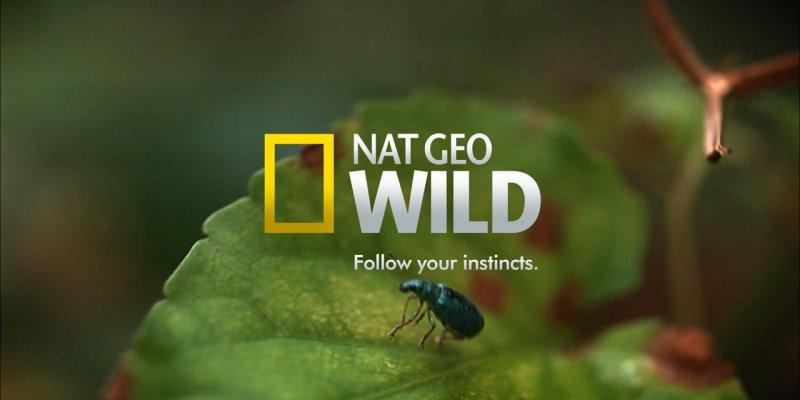 Игра Престолов мира дикой природы на канале Nat Geo Wild